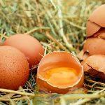 犬や猫は卵を食べていい?卵白や卵焼きは大丈夫?守るべき3つのポイント