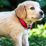 犬に珍しい名前をつけよう!男の子の珍しいかっこいい名前ランキング20