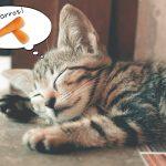 猫は人参を食べても大丈夫 にんじんは葉や皮も食べられる高栄養な野菜