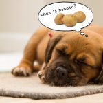 犬はじゃがいもを食べても大丈夫 じゃがいも中毒とイモ類アレルギー