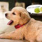 犬はキャベツを食べても大丈夫 きゃべつはなぜかワンコが好きな野菜♪