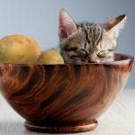 猫はじゃがいもが好き?じゃがいものしぼり汁と腎不全