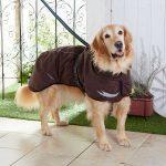 犬用レインコートのおすすめ!人気でおしゃれな売れ筋ランキング