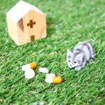 猫にエビオスを与えると腎不全、便秘や下痢に効果があるって本当?