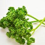 犬はパセリを食べる パセリは抗酸化ビタミンがトップクラスの野菜!