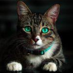 猫の首輪で安全なものおすすめ!猫ちゃんが嫌がらないおしゃれな首輪